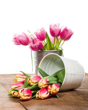 Fresh cut tulips in white metal can