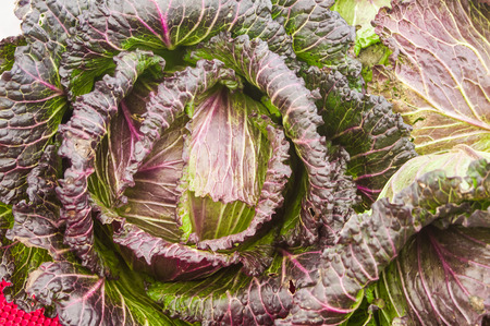 leafed: Colorful red leafed cabbage at the market Stock Photo