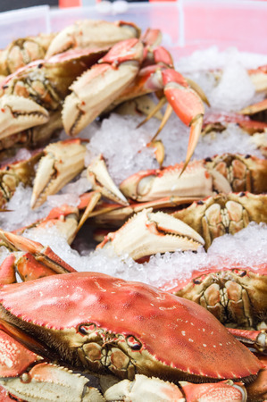 dungeness: Display of fresh Dungeness crab Stock Photo