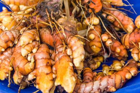 dug: Freshly dug tumeric root at the market