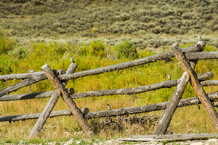 woodcutting: Rustic buck and rail fence in pasture