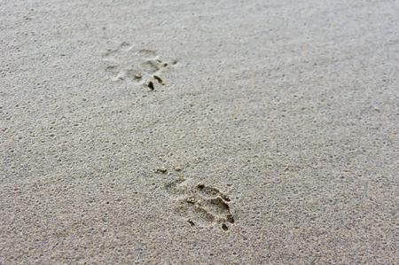 huellas de perro: Huellas de perro en la arena mojada en la playa