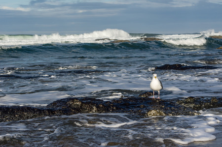 seabirds: Tide pool area on the coast with sea gulls