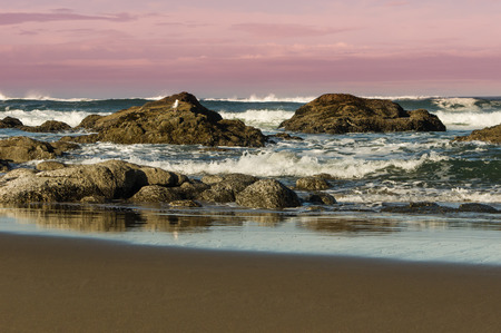 seabirds: Coastal scene with birds and purple sky
