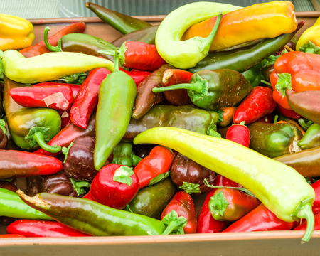 chiles picantes: Chiles rojos y amarillos en exhibición en el mercado de los agricultores