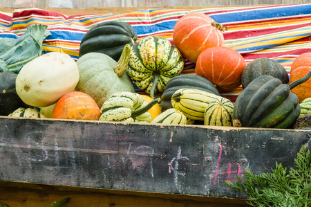 Display of acorn squash and winter squash at the farm market