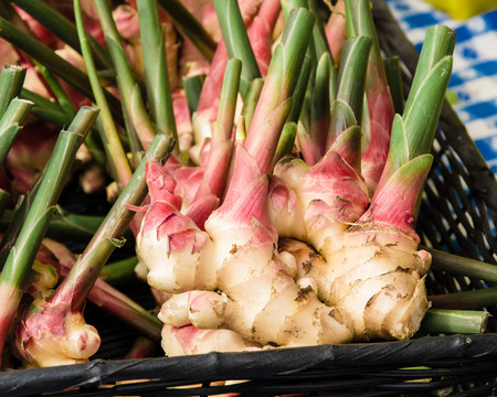 ginger root: Fesh ginger root with stems at the farm market