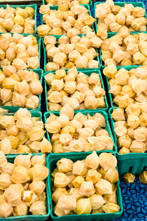 husk tomato: Ground cherries in small boxes at the farm market