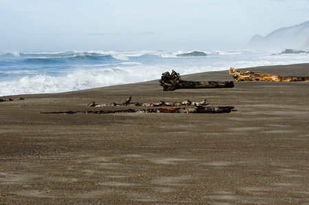 pacific ocean: Sandy beach of the Pacific Ocean with driftwood logs