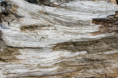 woodcutting: Surface of a large piece of weathered driftwood