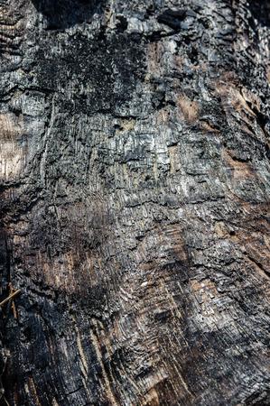 woodcutting: Charcoal surface on burnt driftwood log Stock Photo