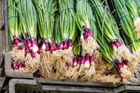 bunches: Display of red onions in bunches at the market Stock Photo