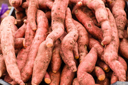 Fresh harvested local sweet potatoes at the farmers market