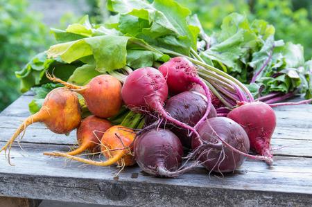 Fresh picked bundles of red and orange beets Banco de Imagens