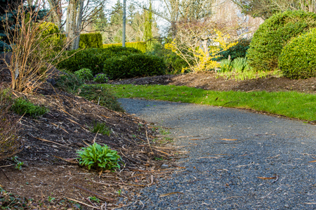 shrubs: Planted garden with path and ornamental shrubs