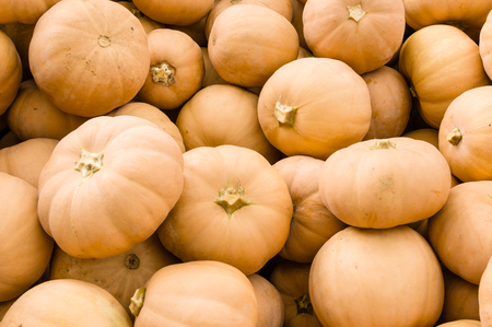 kin: Butter Kin fall squash at the farmers market