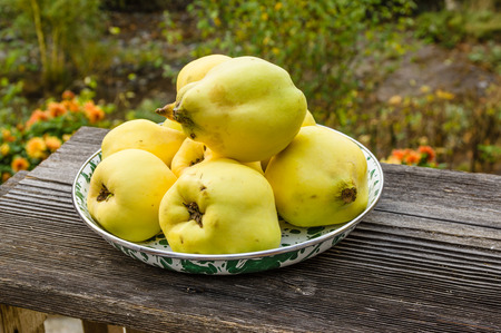 Bowl of fresh Quince fruit harvested and ready to use