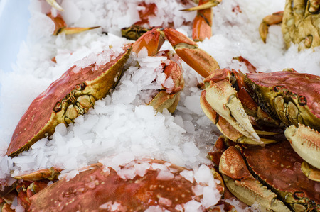 dungeness: Fresh Dungeness crab on ice at the market