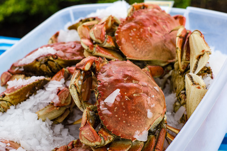 Fresh Dungeness crab on ice at the market