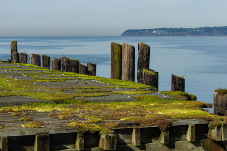 pilings: Moss covered pilings on an old dock