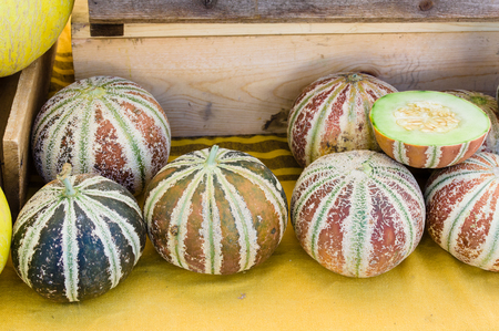 harvests: Sweet fresh picked Kajari melons at the farmers market