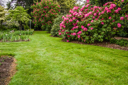landscaped garden: Green lawn and flowering shrubs in a landscaped garden Stock Photo