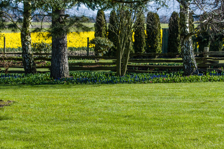 landscaped garden: Green lawn and shrubs in a landscaped garden Stock Photo