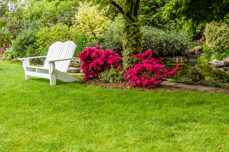shrubbery: Green lawn and flowering shrubs in a landscaped garden Stock Photo