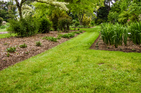 shrubs: Green lawn and flowering shrubs in a landscaped garden Stock Photo