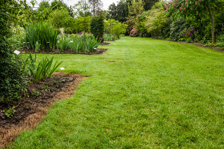 shrubbery: Green lawn growing in a landscaped garden