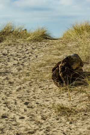 Worn path in the sand over the dune through the beach grass to the Pacific Ocean Stock Photo