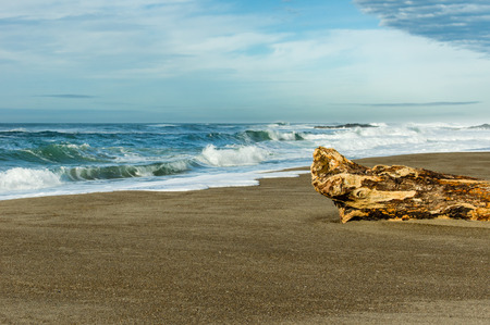 Sandy beach with driftwood log on the Pacific Ocean