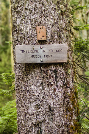 Sign post for trail 600 Muddy Fork in the Mt Hood National Forest