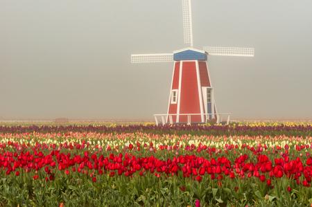 Decorative windmill in the tulip field in the foggy mist