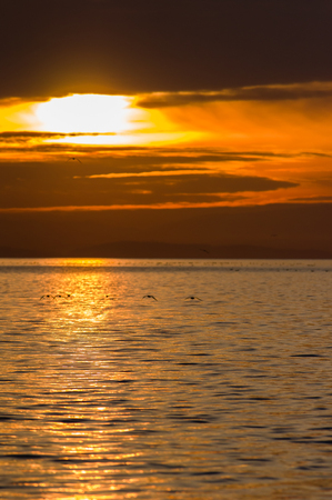 Sunset and waterfowl on Semiahmoo Bay produces a peaceful image of water and clouds