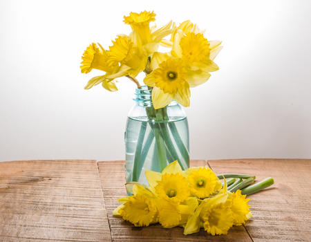 Arrangement of yellow dafodills in blue jar Фото со стока