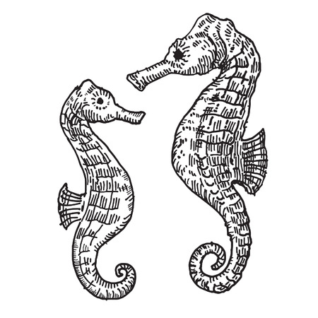 seahorse: the picture drawn by hand.