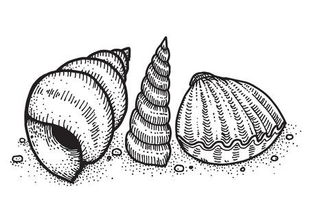 shellfish: Shellfish Illustration