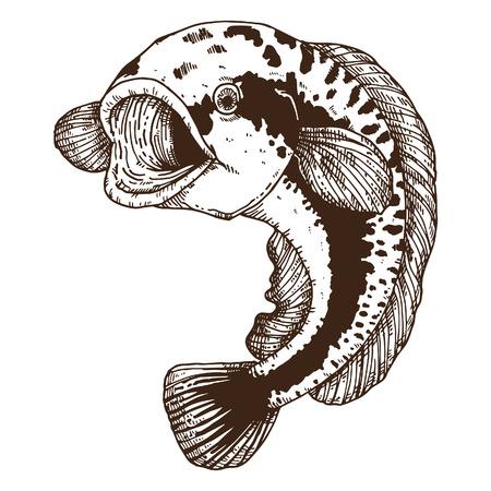 Riesenschlange Fische Standard-Bild - 44624269
