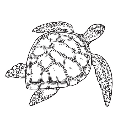 sea animal: Turtle