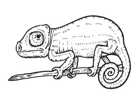 chameleon: Chameleon Illustration