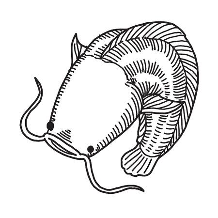 bagre: El siluro