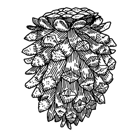 etching: Pine cone