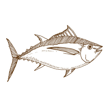 commercial fisheries: Albacore tuna fish.