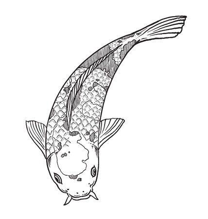 koi: Koi fish Illustration