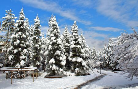 Snowy forest view with small road 免版税图像