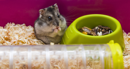 Gray hamster in a cage. grey, closeup, colouration fluffy