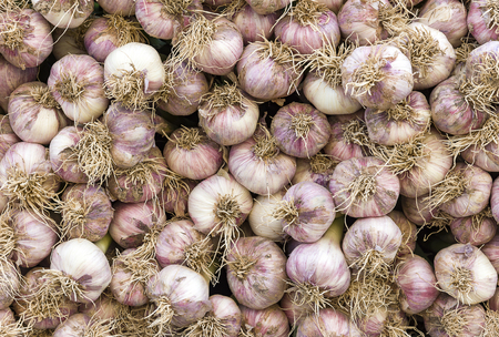 White garlic pile texture. Vitamin healthy food spice image. Spicy cooking ingredient picture. Banco de Imagens