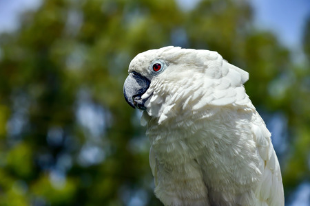 White parrot zoo, pretty, sulphur, tree, parrot native feather avian australian Banco de Imagens