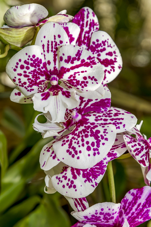 Orchid flower in garden at winter or spring day for postcard beauty and agriculture idea concept design. Banco de Imagens
